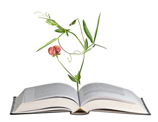 Flower growing from open book