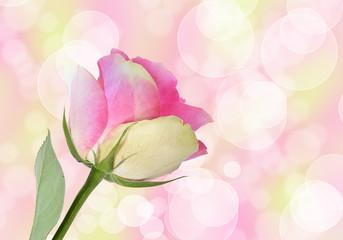 Glamour - Rose