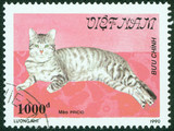 stamp printed in Vietnam, shows cat (Meo Pricio)