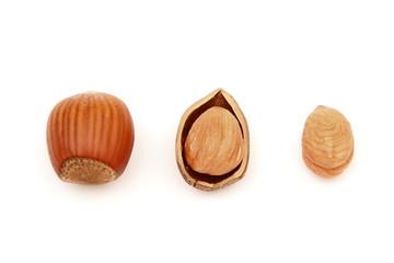 Nocciole - Hazelnuts