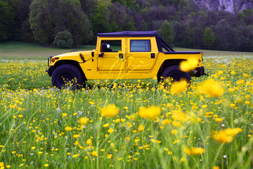 Hummer in Blumenwiese