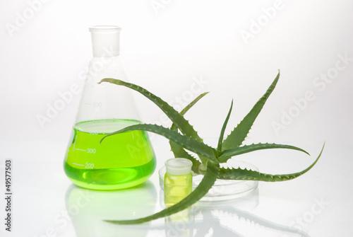 aloe vera plant with tubes