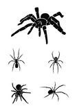 spider Collection Set