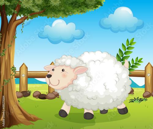 Foto op Canvas Boerderij A sheep inside the fence