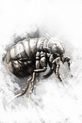 Louse illustration made with digital tablet, insect