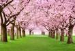 Leinwanddruck Bild - Gartenanlage in voller Blütenpracht