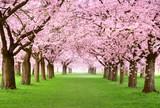 Fototapety Gartenanlage in voller Blütenpracht