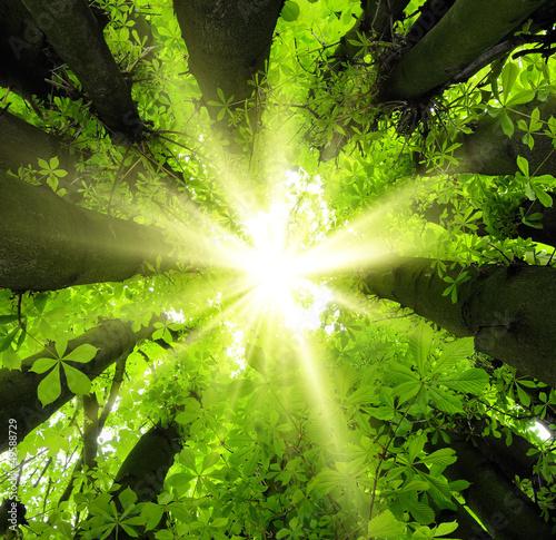 promienie-sloneczne-spadaja-przez-wierzcholki-drzew