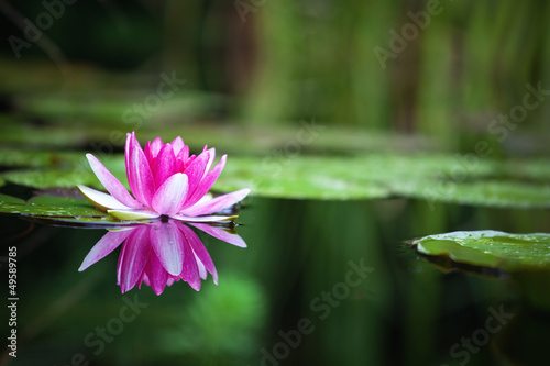 Aluminium Lotusbloem Pink waterlily