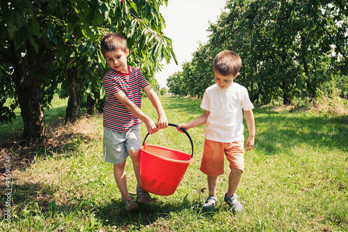 Young brothers carrying bucket of cherries outdoors.