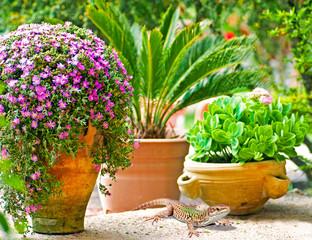 Eidechse in mediterranem und naturnahem Garten