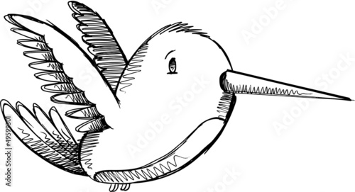 Cute Hummingbird Sketch Drawing Vector Art