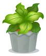 A green ornamental plant
