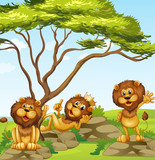 A group of lions