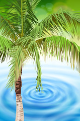 palm tree & tropical beach blue water