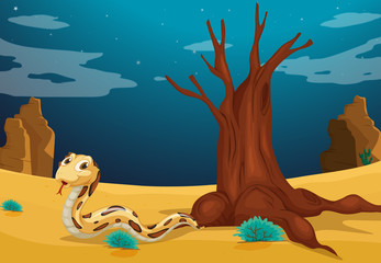A snake at the desert