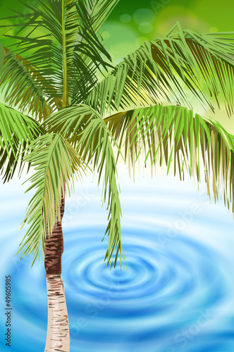 palm tree & tropical beach blue water