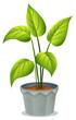 A pot of green plant