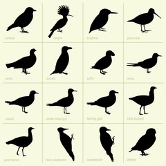 Set of birds (part 2)