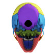 3d rendered illustration - human skull anatomy
