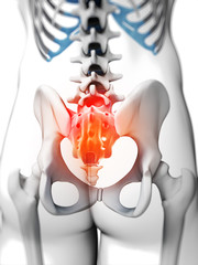 3d rendered illustration - sacrum