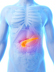 3d rendered illustration - pancreas