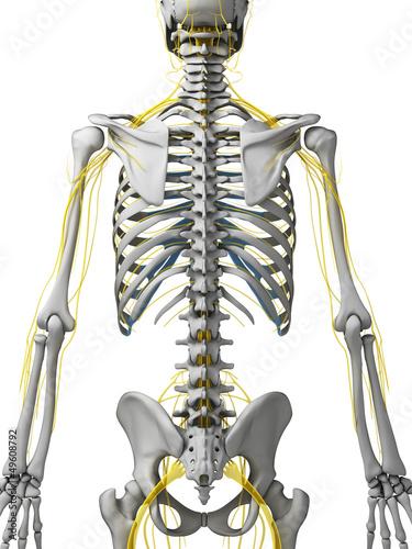 3d rendered illustration - nerves
