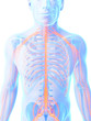 3d rendered illustration - male nerve system