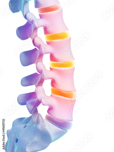 3d rendered illustration - human spine