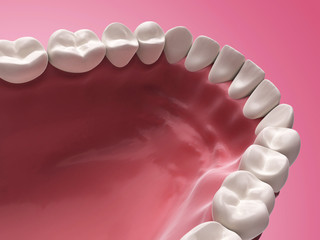 3d rendered illustration - lower teeth