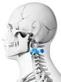 3d rendered illustration - axis vertebrae poster