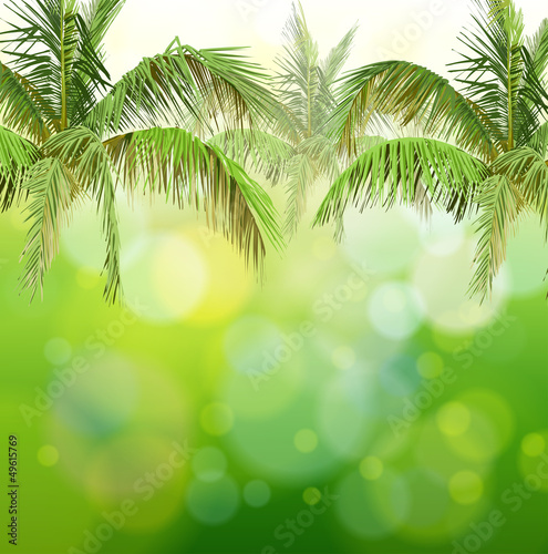 Green bokeh with branches of palm trees