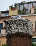 gulls nest on corinthian capital in historical city poster