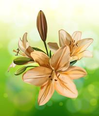 Lily on green bokeh