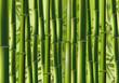 Fototapeten,asiatisch,entspannen,asien,bambus