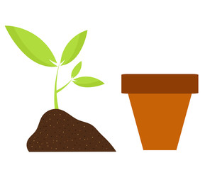 Plant and pot