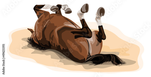male warmblood horse rolling in sand