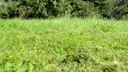 meadow grass closeup lawn cutter mower worker pass