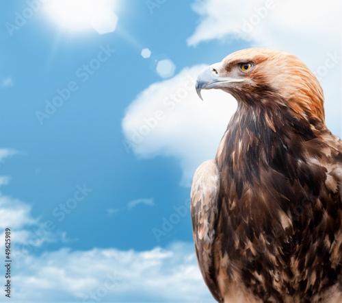 eagle on background sky