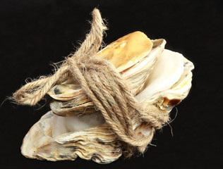 Shell with rope