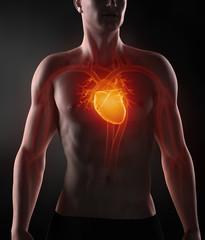 Man with circulatory system