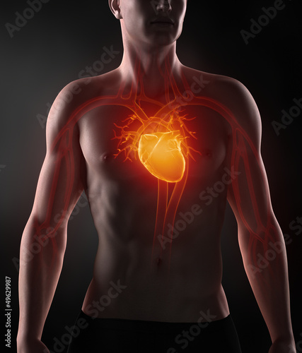 Man with circulatory system