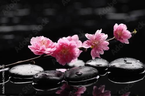 oddzial-tropikalnej-orchidei-z-kamieniami-terapii