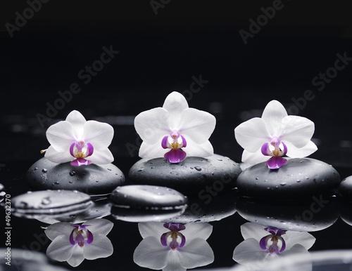 kwiat-orchidei-i-kamienie-w-kropli-wody