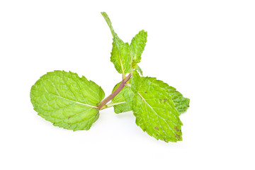 green mint on white paper
