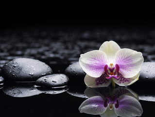 Beautiful white orchid with zen stones on wet black background