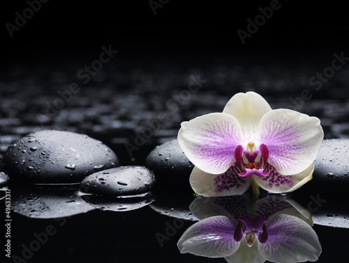 Beautiful white orchid with zen stones on wet black background - 49633317