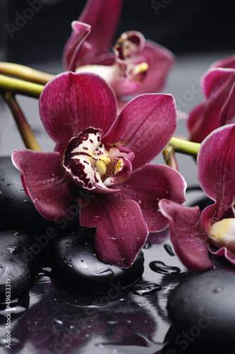 set of branch gorgeous red orchid on stones reflection