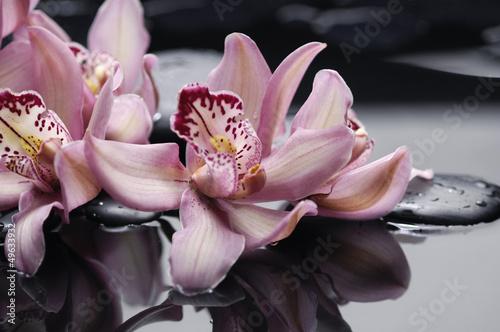 Obraz na Plexi spa concept –gorgeous pink orchid and zen stones