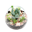Group of house plants in a round glass pot.